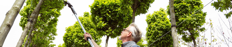 Przycinanie drzew Gdańsk